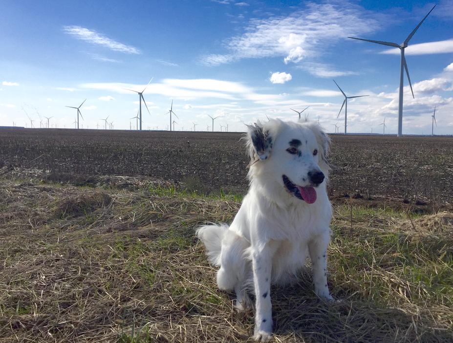 Avangrid_Wind_Farm